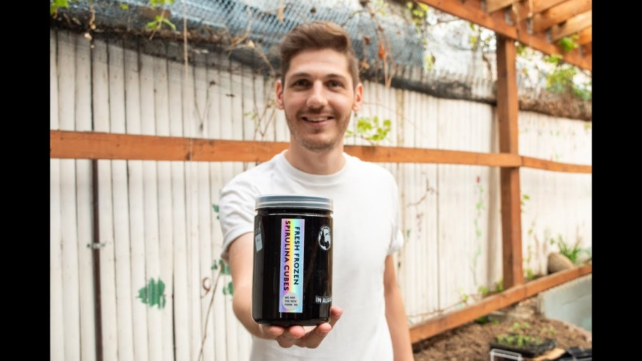 How an NYU Tandon alumnus is growing the sustainable superfood spirulina
