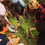 Urban agriculture students harvesting basil. We smell some farm-fresh pesto in our futures.