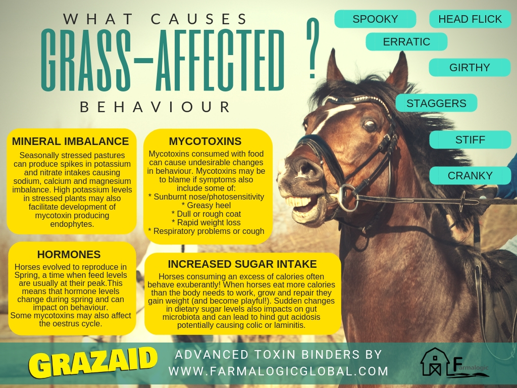 What causes grass-affected behaviour in horses?