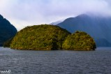 An island in Doubtful Sound that we thought was shaped like a turtle!