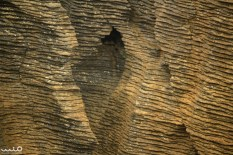 A close-up of the pancake layers of the rocks at Punakaiki