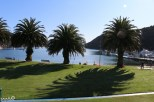 Wonderful sunshine and palm trees on the Picton harborfront