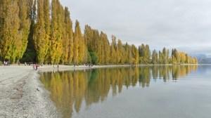 4月16日ワナカ湖畔の黄葉