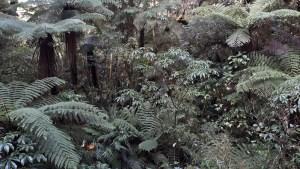 6月15日のミルフォードサウンドへの道のり原生林の森