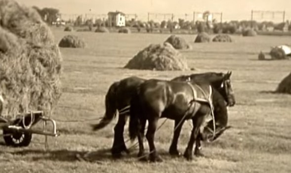 Documentary: The Friesian Horse