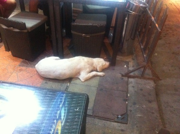 dog chakrapong rd rainbow hostel