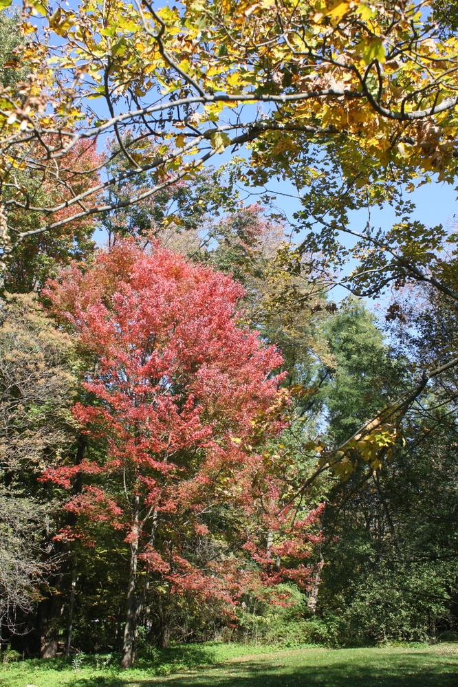 massachussetts new england fall colours