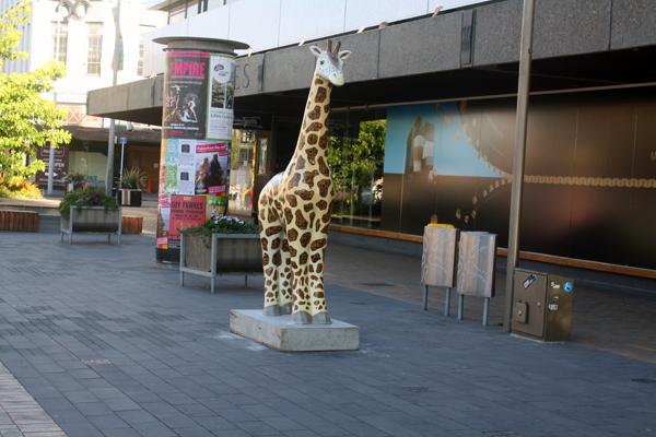 Christchurch colourful giraffe art