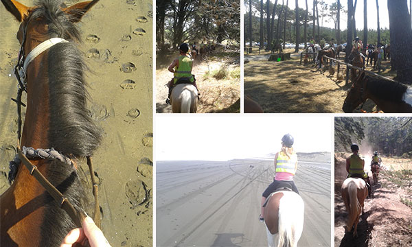 Horse riding at Muriwai - Muriwai Beach Horse Treks