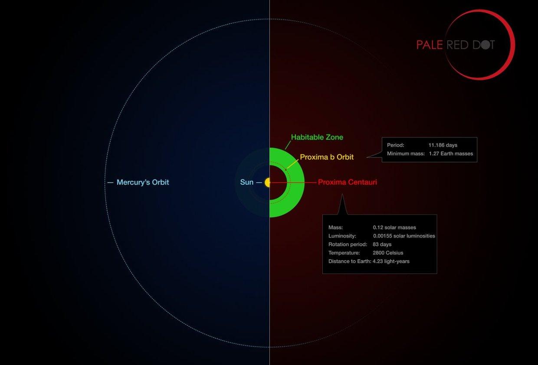 Слика 4. Орбитата на Проксима Б во однос на онаа на планетата Меркур во нашиот сончев систем. Со зелена боја е означена зоната на населеност на Проксима. ©Pale Red Dot