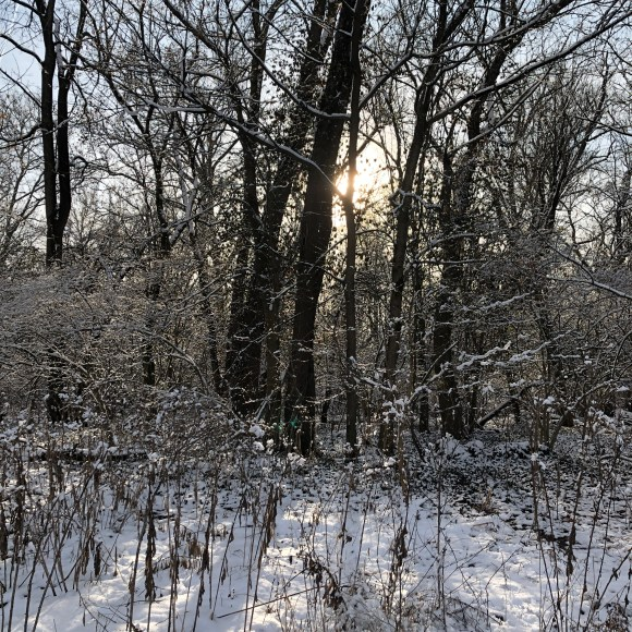 winter landscape with sun behind the trees and snow on the ground