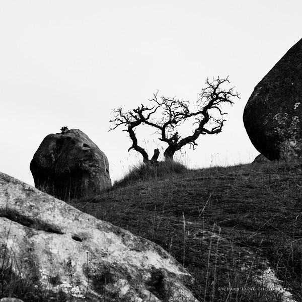 Castle Hill in Monochrome! (2/6)