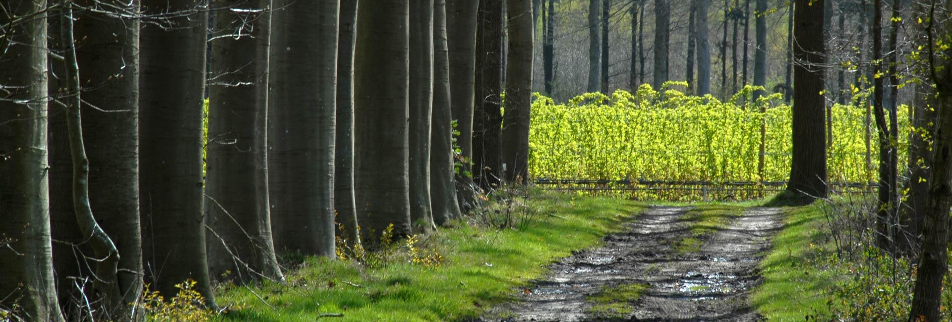 Beernem zicht door dreef op frambozenveld