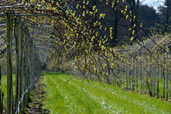 O'Bio jonge kiwibesplantage