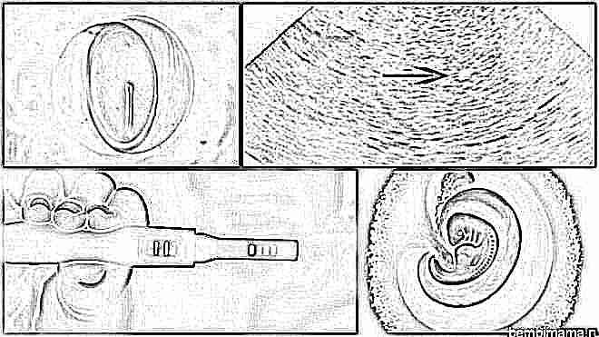 Беременность по неделям: от ощущений до развития крохи - 11
