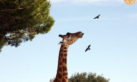 Balade exotique au Zoo | La Barben