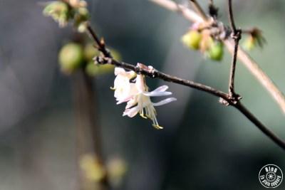 jardin saint-bernard hyères 11