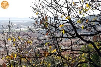 jardin saint-bernard hyères 13