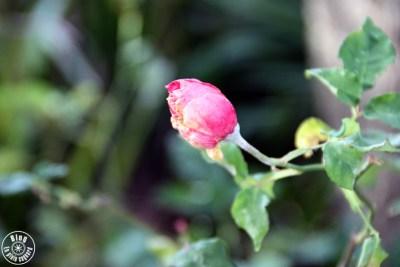 jardin saint-bernard hyères 4