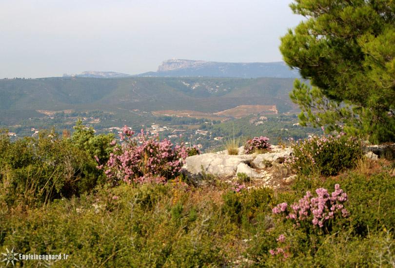 Sur les hauteurs de La Cadière   La Cadière