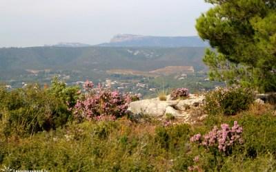 Sur les hauteurs de La Cadière | La Cadière