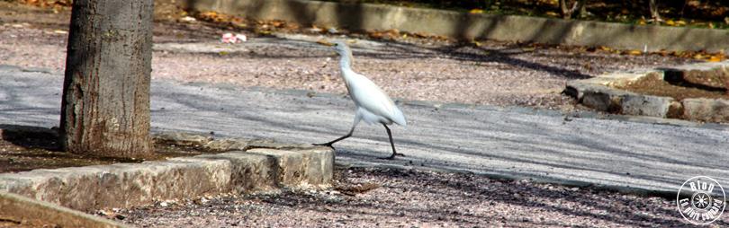 parc-olbius-riquier-hyères-11
