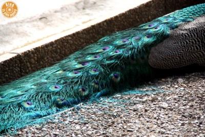 parc-olbius-riquier-hyères-24
