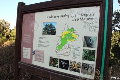 balade_collobrieres_16