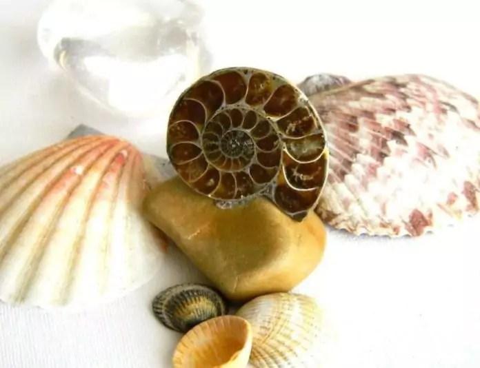 mi a módszer a fosszíliák randiához?