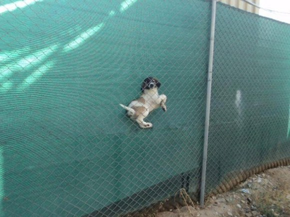 Funny, Dogs Who Have Made Poor Life Choices, Poor Making Terrible Mistakes