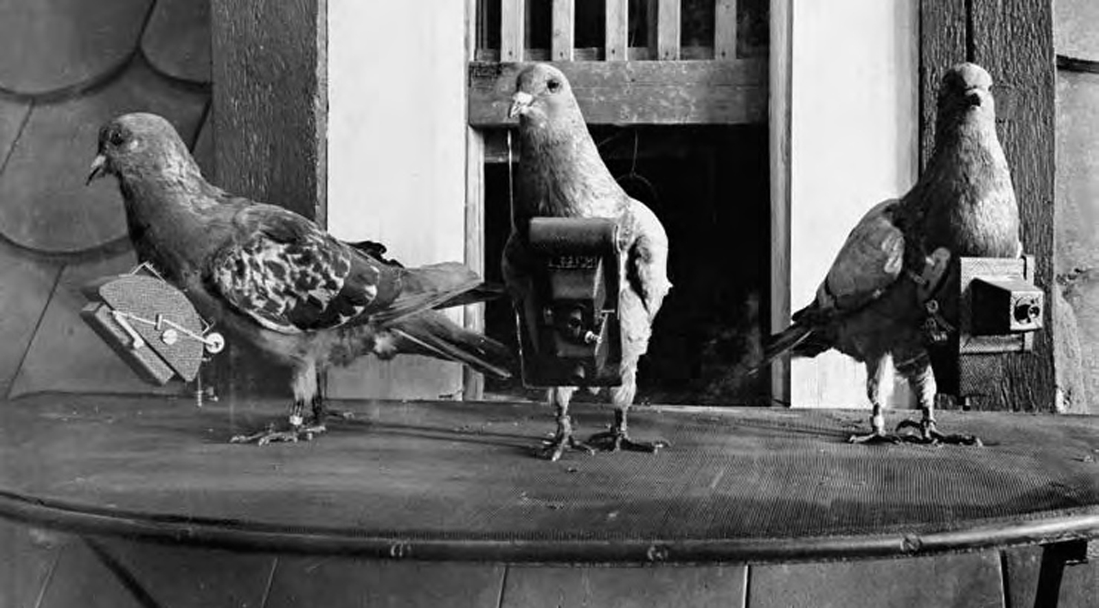 Pigeoncameras.jpg