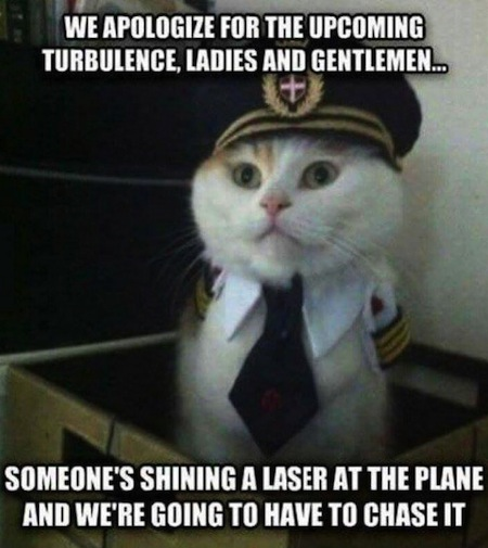 weird cats, evil cats, airplane captain cat