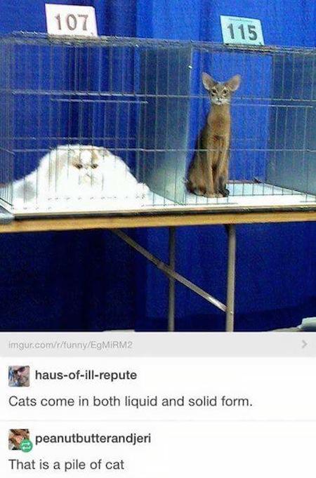 weird cats, evil cats, melting cat