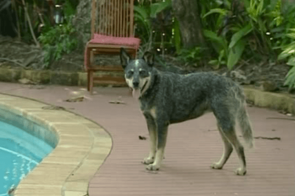 incredible animal journeys, amazing animals, sophie the dog