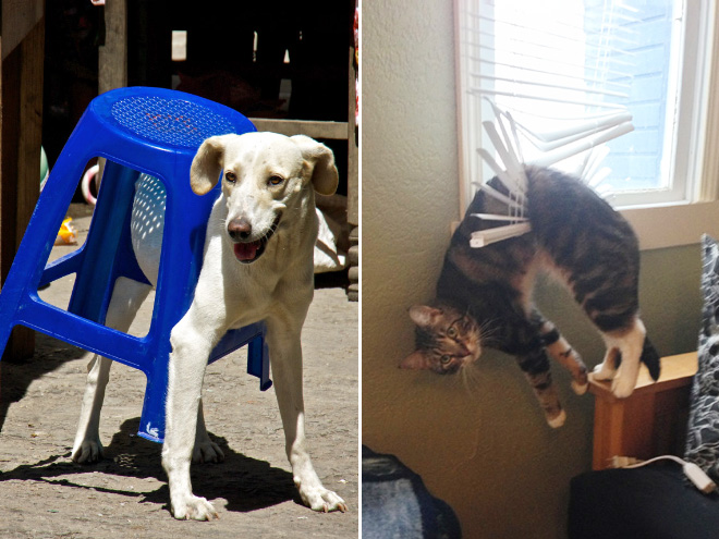 stuck pets, pets stuck pretending everything is cool, dog stuck stool, cat stuck blinds