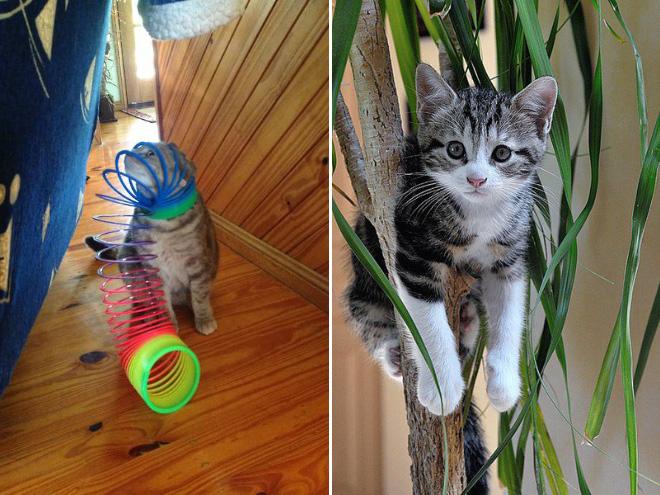 stuck pets, pets stuck pretending everything is cool, cat stuck slinky, cat stuck tree