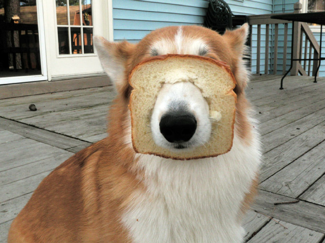 stuck pets, pets stuck pretending everything is cool, dog face slice bread