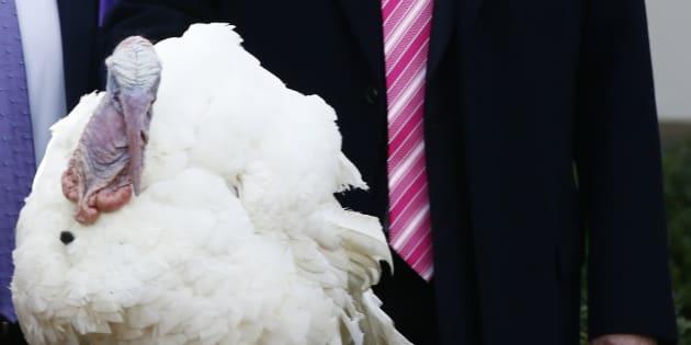 El presidenta Donald Trump toca al pavo Drumstick, al que ha indultado en la Casa Blanca. REUTERS/Jim Bourg