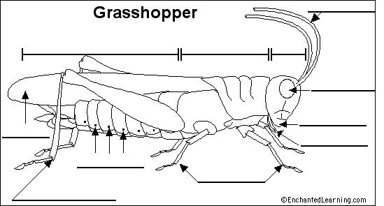 Arthropods Diagram Quizlet
