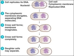 Characterizing Amp Classifying Prokaryotes And Eukaryotes