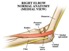 Read the Radial, Ulnar and Median nerve lesion Chapters in ...