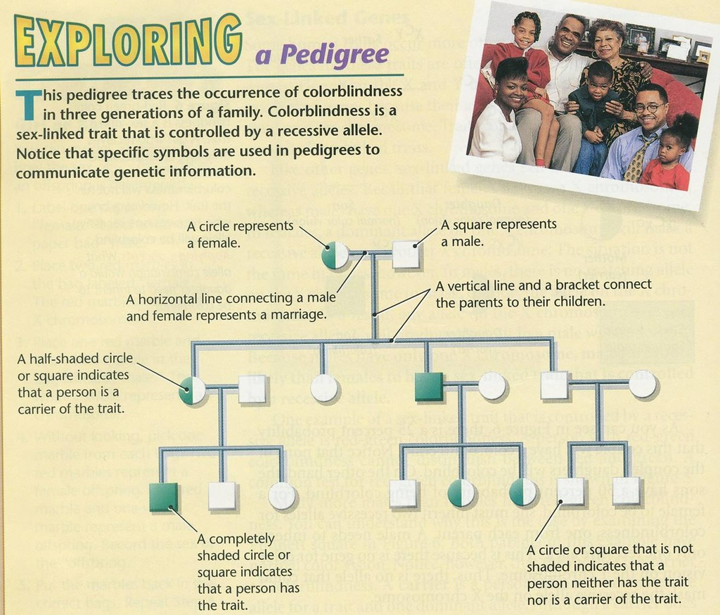 The Pedigree Traces Red Green Color Blindness Which Family