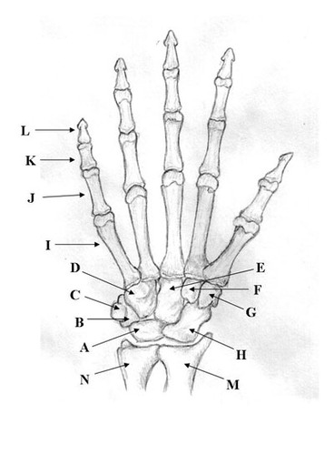 Printable Anatomy Skull Bones Blank Diagram
