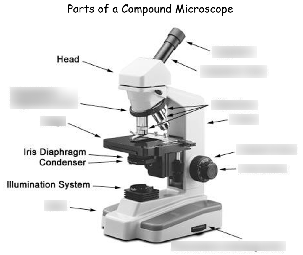 Parts Of A Compound Light Microscope Quizlet