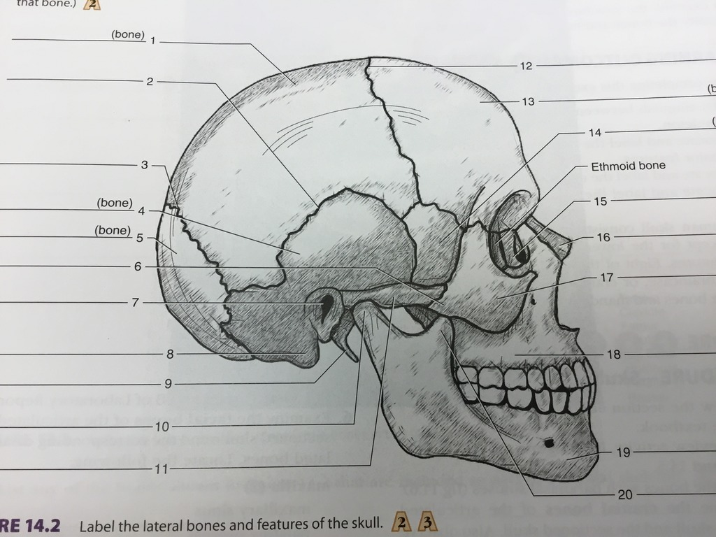 30 Label The Anterior Bones And Features Of The Skull