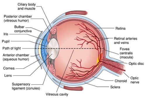 8 A Aqueous Humor Ah Outflow From The Anterior Chamber In A
