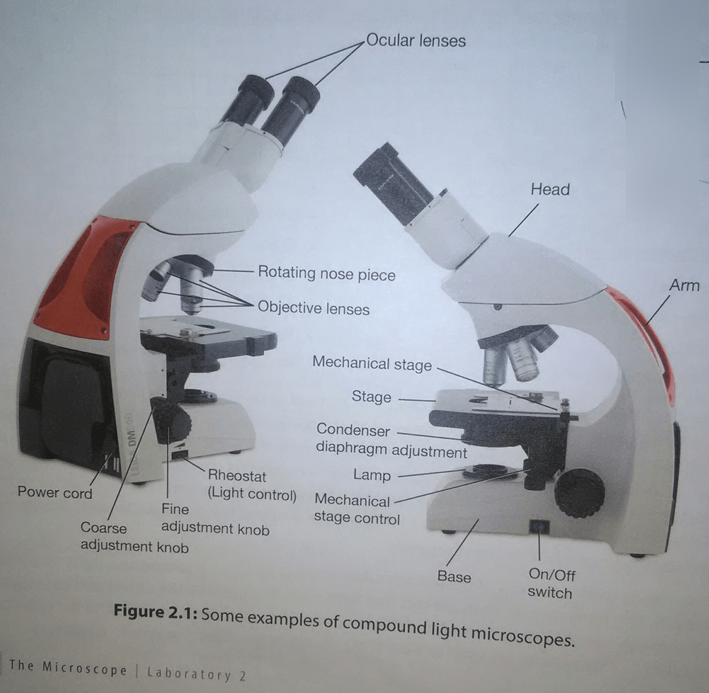 Compound Light Microscope Parts And Functions Quizlet