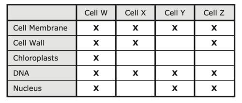 Staar English 2 2019 Answer Key / 2019 Staar Biology Exam ...