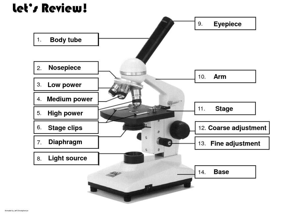 Anatomy Of Microscope