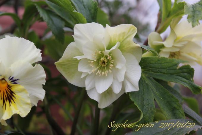 IMG_flower160